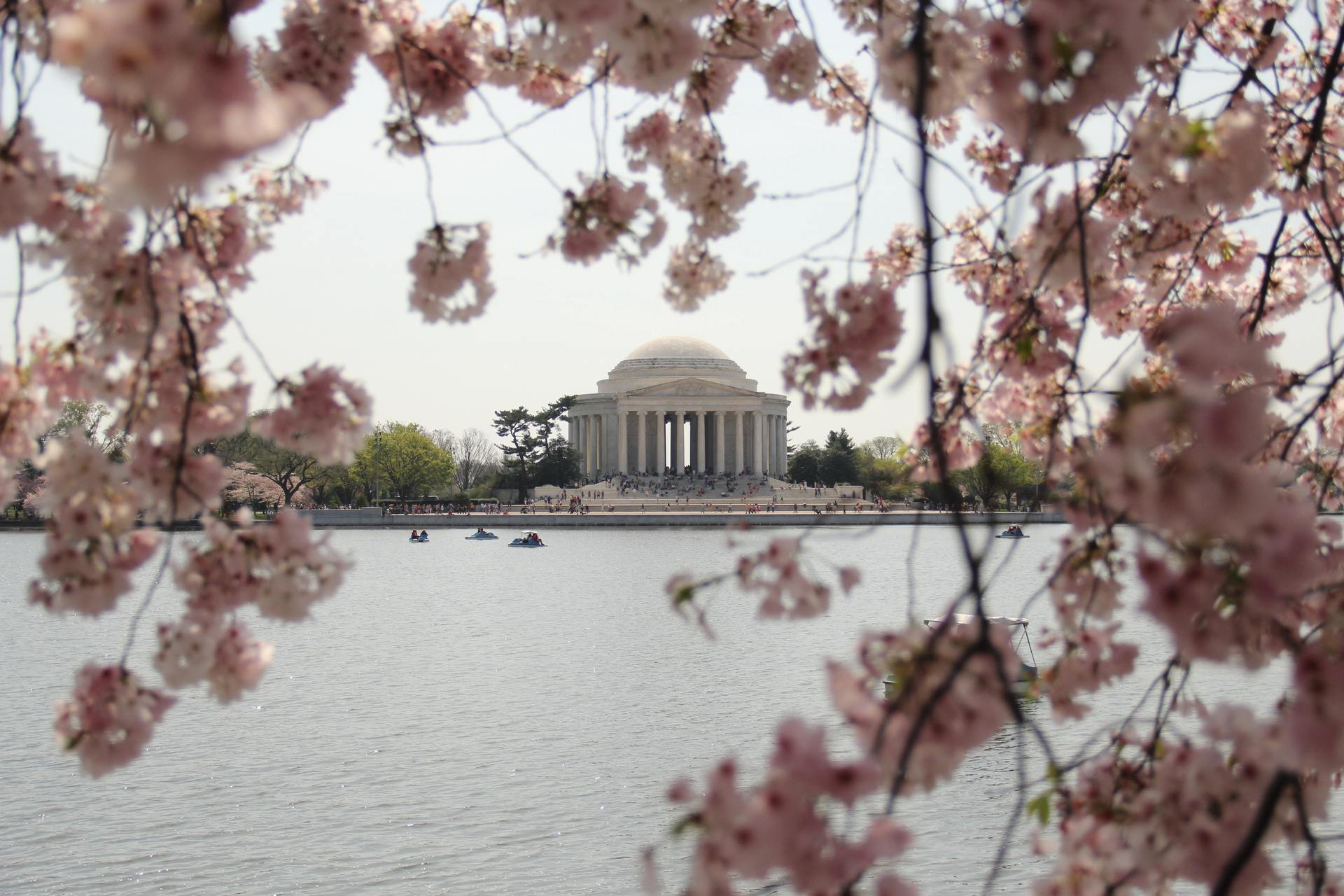 Cherry blossoms jefferson memorial thomas jefferson 1186831